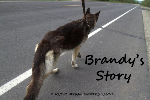 AGSR Long Road To Recovery Brandy Story