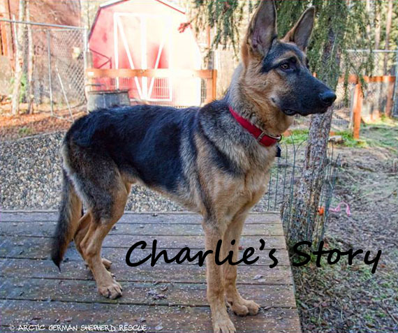 AGSR Long Road To Recovery Charlie Story