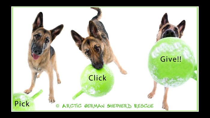 Arctic German Sherherd Rescue Pick Click Give