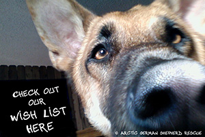 Arctic German Shepherd Rescue Wish List